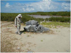 caribbean-tsunami-anegada-brain-coral