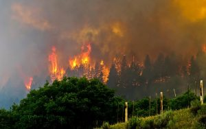 This photo from Inciweb shows the 416 Fire burning trees near US Highway 550. The 416 Fire began burning on June 1, and has consumed nearly 26,000 acres so far. Unfortunately, it is only 15% contained.
