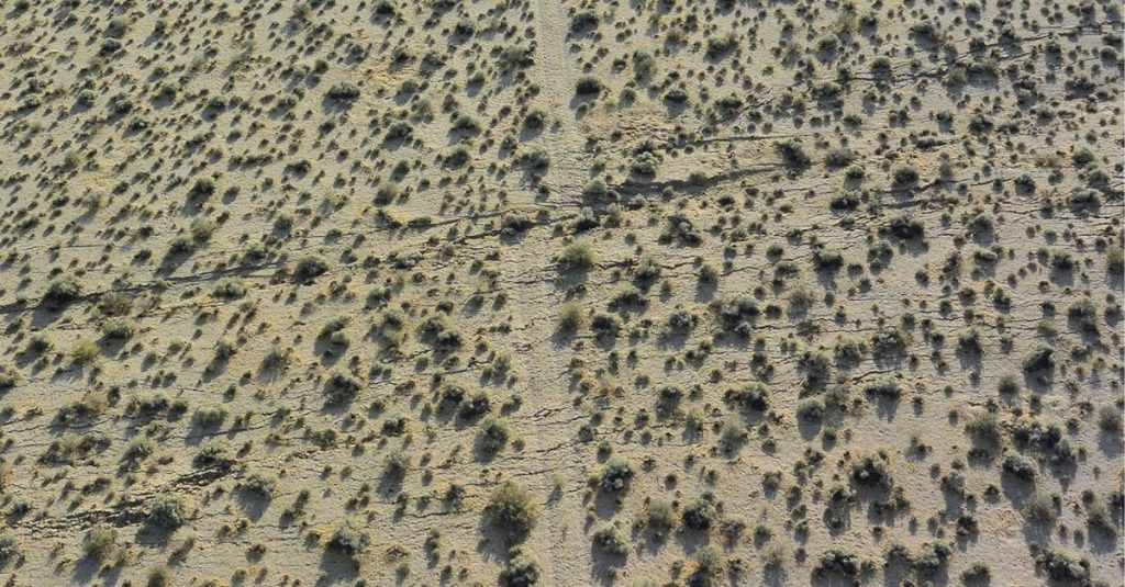 Ridgecrest fault rupture, with a main rupture and distributed faulting over 20 m (70 ft). Photo by USGS. To see a series of fault rupture images, see Stewart et al. (2019).