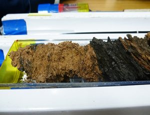 Core samples from the fault zone of the Japan Trench were recovered by the JFAST project and analyzed for evidence of past large earthquakes. Credit James Kirkpatrick