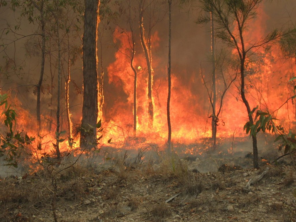 A bush fire blazes in central Queensland. Credit: 80 trading 24 (CC BY-SA 3.0)
